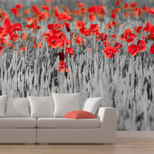 Fototapeta - Red poppies on black and white background - 200x154