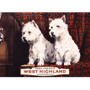 Plechová cedule West Highland - pejsci WHITE AND WHITE 19A303