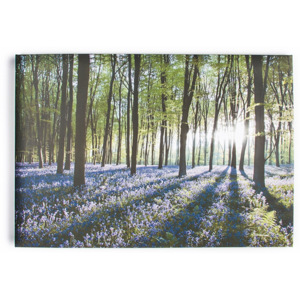 Obraz Graham & Brown Bluebell Landscape, 100 x 70 cm