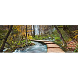 Fototapety Path into the Forest F436
