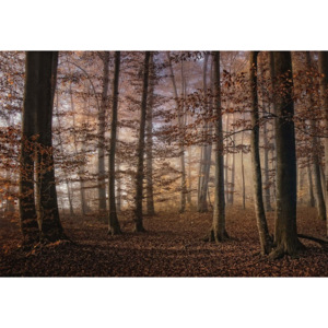 Fototapeta, Tapeta Autumn In The Forest, (104 x 70.5 cm)