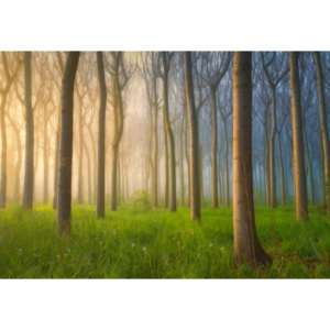 Fototapeta, Tapeta Misty Morning, (104 x 70.5 cm)