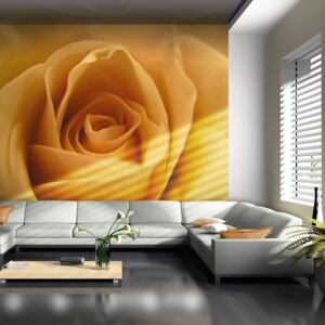Fototapeta Bimago - Yellow rose – a symbol of friendship + lepidlo zdarma 200x154 cm