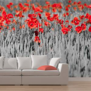 Fototapeta Bimago - Red poppies on black and white background + lepidlo zdarma 200x154 cm
