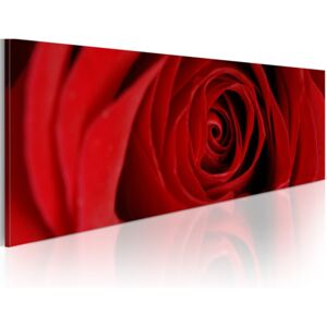 Obraz - Midnight rose 120x40