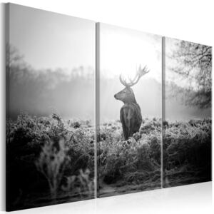 Obraz - Black and White Deer I 90x60