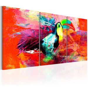 Obraz - Colourful Toucan 60x30