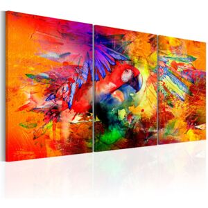 Obraz - Colourful Parrot 120x60