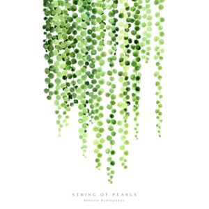 Watercolor string of pearls illustration, (85 x 128 cm)