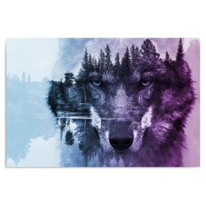 Obraz CARO - The Wolf On The Background Of The Forest - Purple 40x30 cm