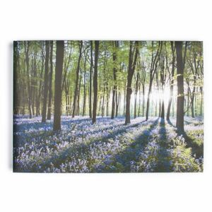 Obraz Les 40-247, Bluebell Landscape, Wall Art, Graham Brown